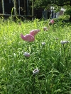 Mid-season flamingo with thriving southern grasses