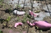 Detail of decomposing flamingo sculptures and seed bombs.