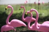 June 2013: Fresh flamingo lawn ornament sculptures; ready to decompose in the rain.