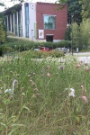 View of August garden with deCordova Museum in background
